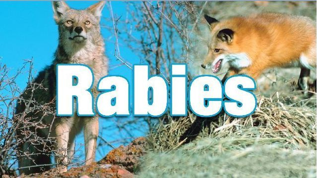 LaGrange police reminding residents of rabies after dog dies