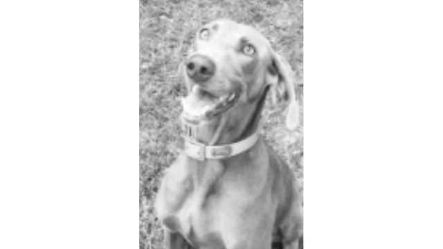 Family pet shot and killed in Tallapoosa County