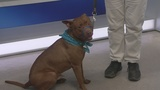 Rambo is our Pet of the Week