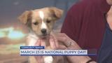 PAWS Humane announces dog adoption specials March 22-24 in honor of National Puppy Day!