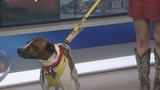 Meet Scooby: Pet of the Week from Animal Ark