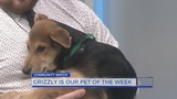 Meet Grizzly: Pet of the Week from City of LaGrange